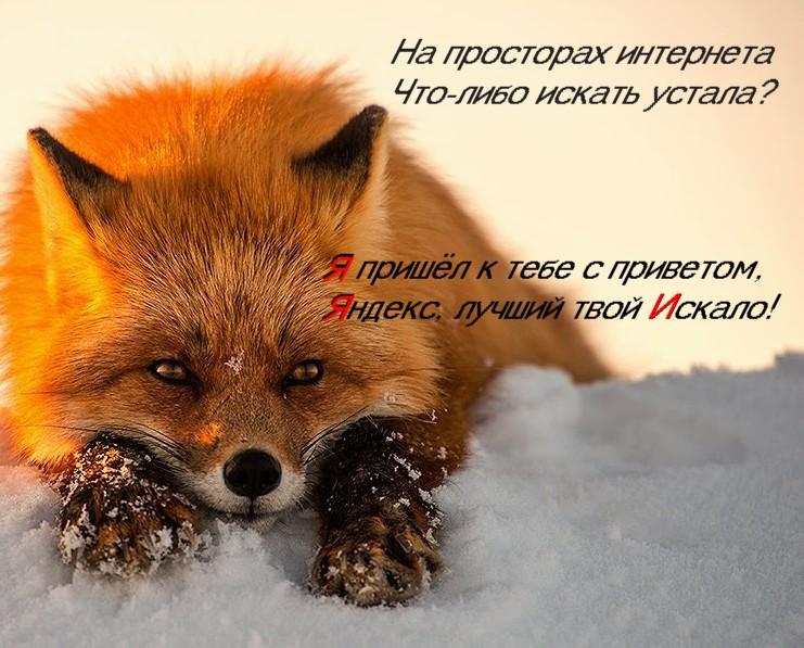 Лиса_
